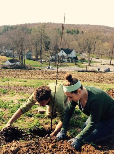 Planting fruit trees