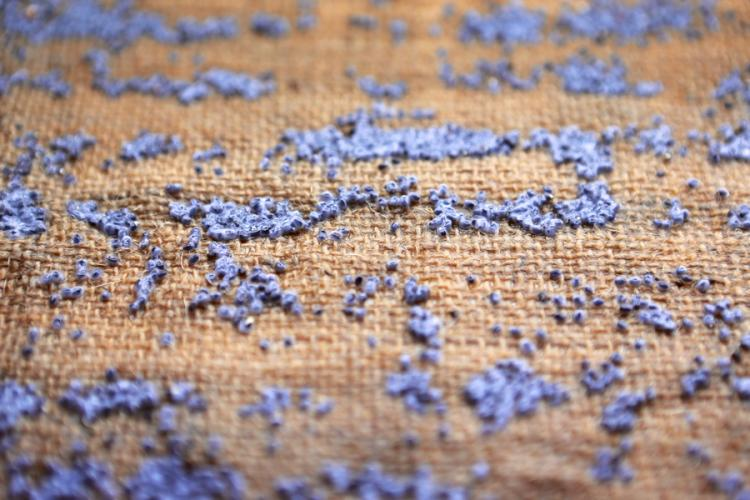 Lavender Seeds Purdy's Farmer and the Fish