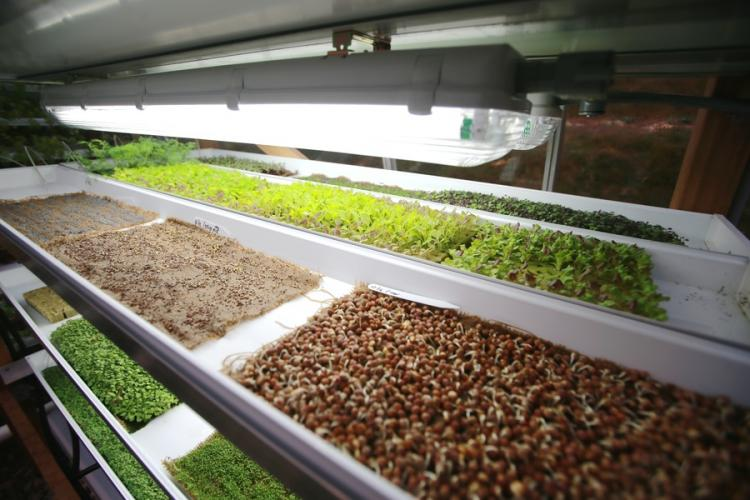 Lettuce seedlings in greenhouse Purdy's Farmer and the Fish