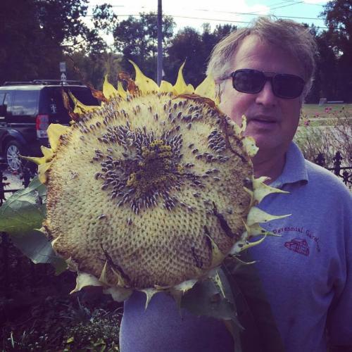 Robert with Sunflower